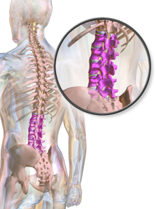 Illustration showing the lumbar spine